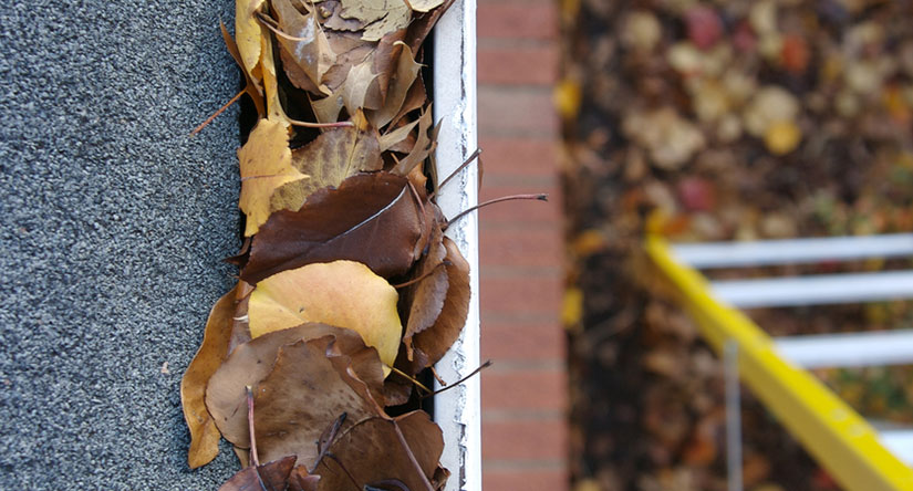 Gutter Cleaning and Repairs in Scotch Plains, NJ