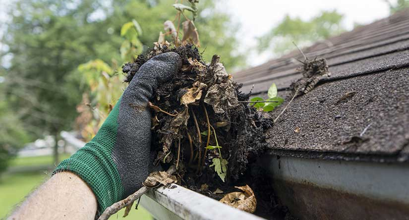 Cranford Gutter Cleaning Services
