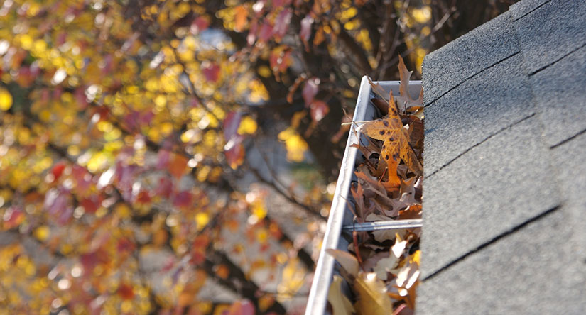 Gutter Cleaning Services in Scotch Plains, NJ