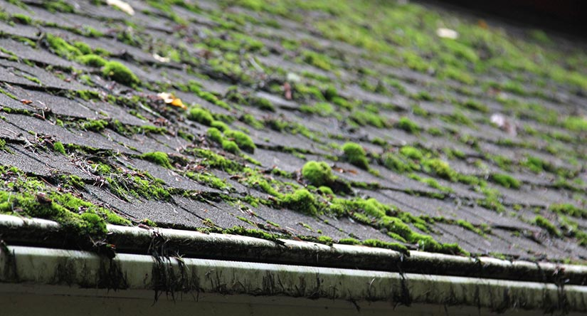 Removing Moss from Roof