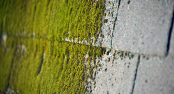 Top Ways To Removing Moss From Your Roof